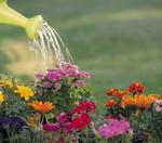 полив цветов