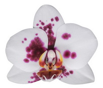 Alicante (Anhura) цветок 8 см